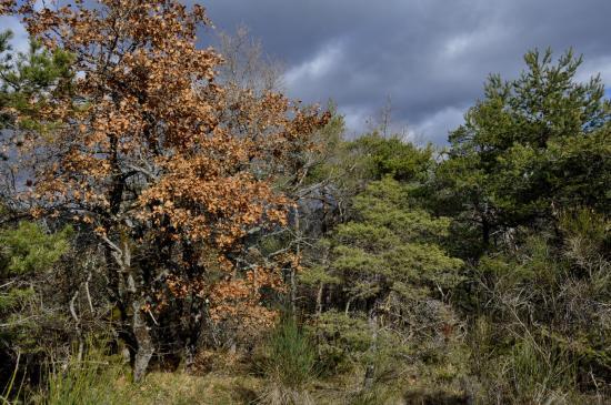 La clairière dans laquelle il faut tourner entre Pourcheton et la MF de Roury (le sentier démarre au pied de l'arbre rouge)