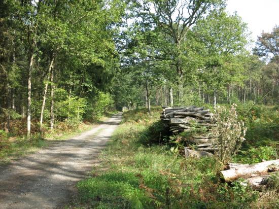 Une allée forestière dans le Bois du Roi