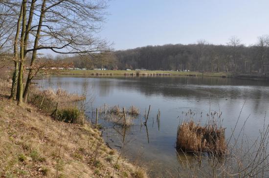 Les étangs de la forêt de Meudon