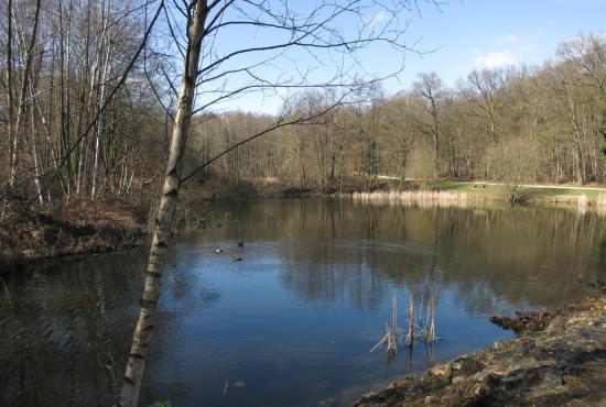 Les étangs de la forêt de Bondy