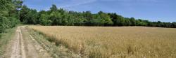 Les champs du côté de Thénizy