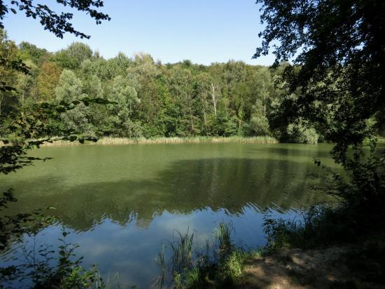 Les étangs de la forêt de Carnelle