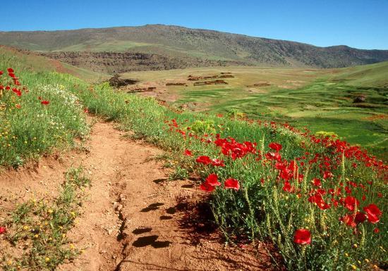 Le plateau du Yagour