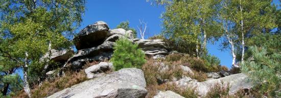 Le rocher de la Reine (Fontainebleau)