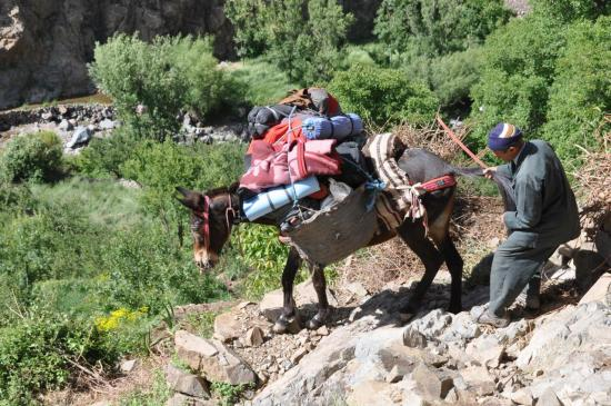 Hussein Zaim retenant sa mule dans la descente vers l'assif Ouanoukrim