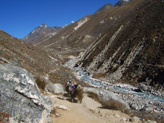 Descente de la vallée de la Bhote kosi