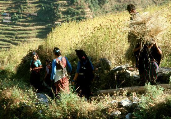 Scène des champs à Chalise
