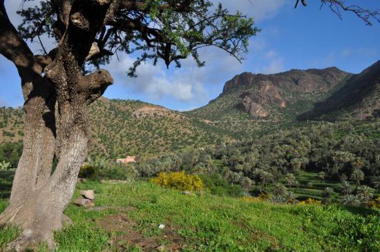 L'oasis de Targa n'Touchka