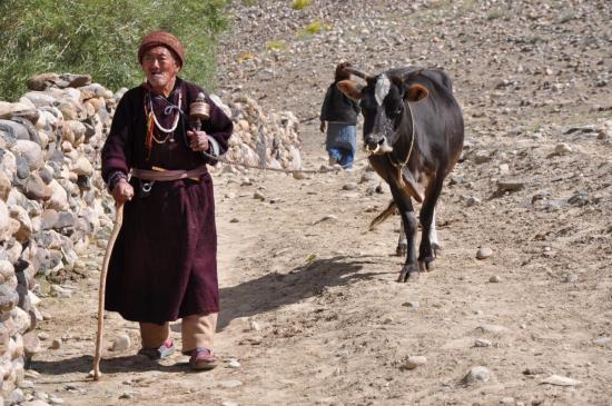 En route pour le monastère de Phuktar...