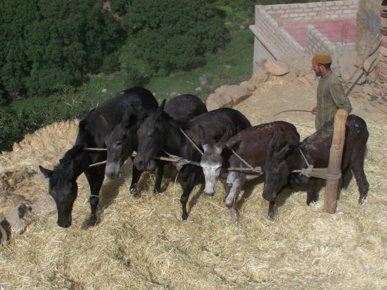 Dans le village de Tissaldai