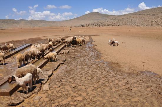 Sur le plateau du Koucer : Almou n'Ouhanad