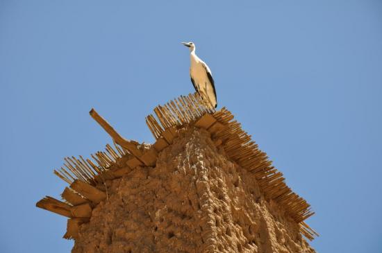 Bibi la cigogne nous accueille à Bou Taghar