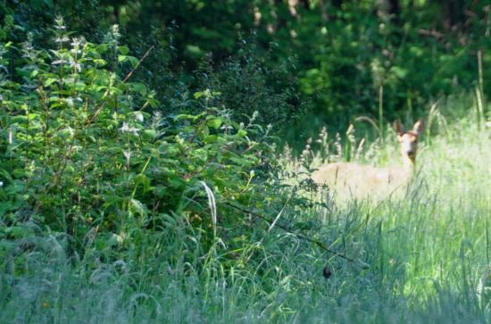 Rencontre surprise en forêt de Rambouillet