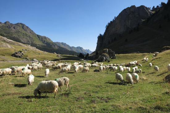 A la bergerie de Cap de Pount
