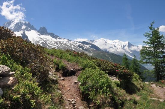 Aiguille Verte et Mont-Blanc depuis Péclerey