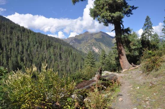 Une descente bien agréable vers la vallée de la Thuli Bheri khola
