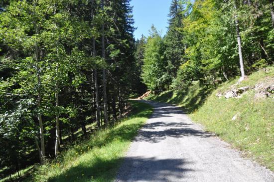 Sur la piste forestière des Murailles