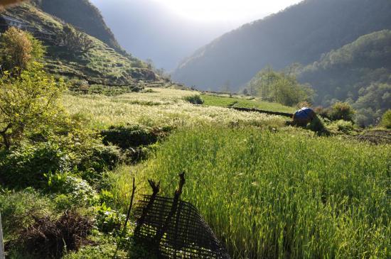 Le plateau agraire de Kimrong