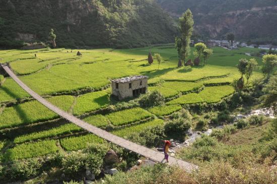 Les rizières de Lubughat