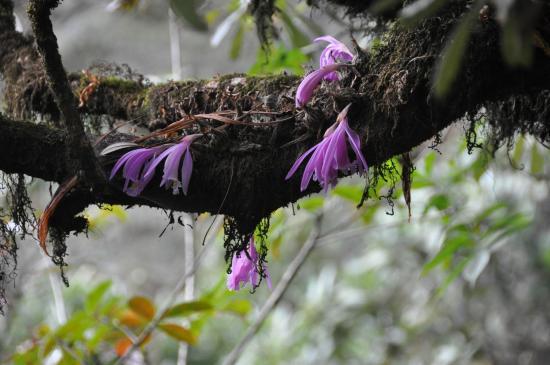 Entre Doremba et Dhara : le Népal fait partie des pays tropicaux, on l'oublie souvent...