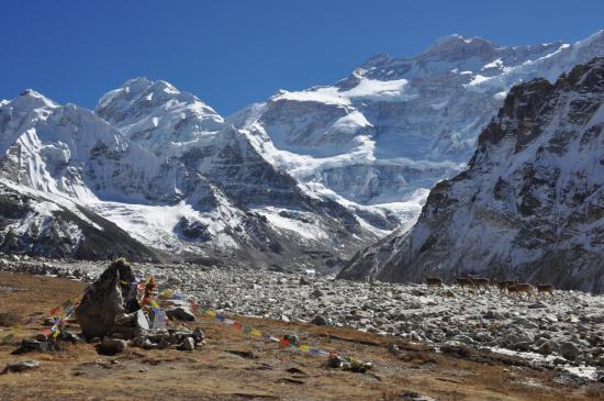 Panorama depuis les bergeries de Pang Pema avec le troupeau de bharals