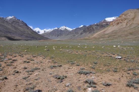 Sur le chemin de Sarchu, traversée de la prairie de Kham Krap