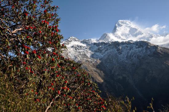 L'Annapurna S vu de Dobato