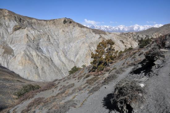 A l'approche des alpages de Chhumuja
