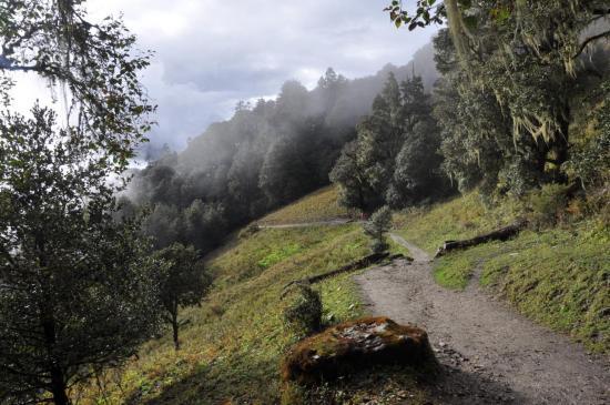 Les forêts du Balangra La (Dharmasala)