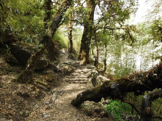 Immergé dans la forêt primaire du côté de Lama hotel