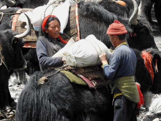 Ce n'est pas la fiction du film Himalaya mais les scènes de vie quotidiennes du Haut-Dolpo...