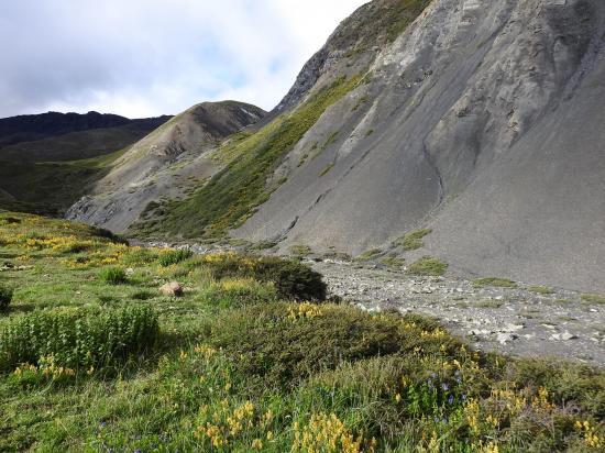 Dans la haute vallée de la Dachung khola