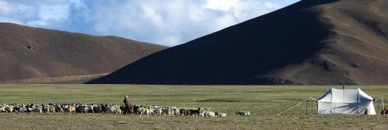 Campement de nomades tibétains sur le plateau des lacs Kyun Tso