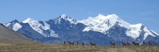 Accueil au Norbu La par une communauté de kiangs (en arrière-plan le sommet du Gya)