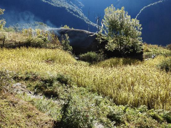 Chyamtang, ses terrasses plantées de millet au-dessus de la vallée de l'Arun nadi