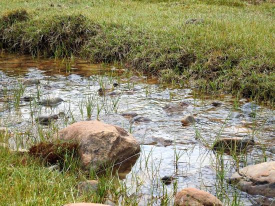 Un peu d'herbe en bordure de la rivière du côté de Likhim yogma