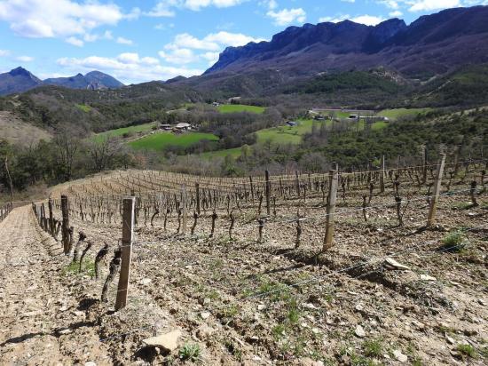 Les vignes d'Aubenasson sous les Trois-Becs