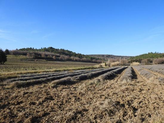 Valaurie (domaine viticole Rozel)
