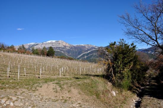 Les vignes au-dessus du hameau des Derbons