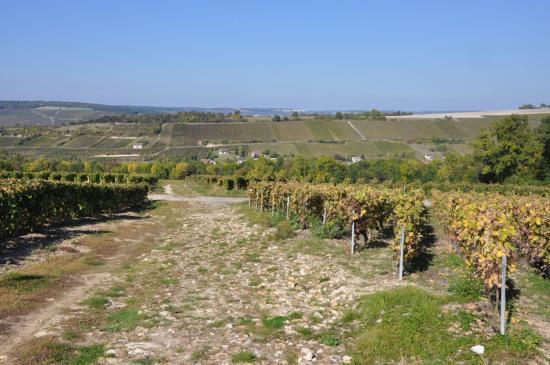 Dans les vignes au-dessus de Chézy-sur-Marne