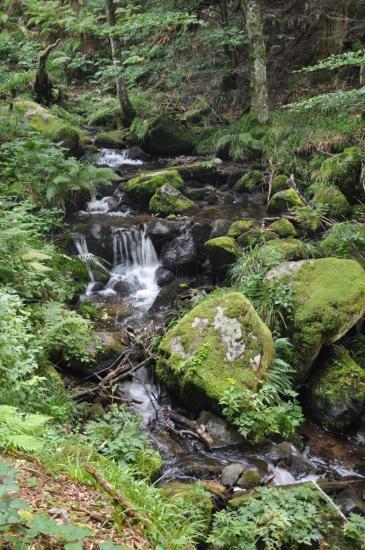 Le ruisseau émissaire du lac de Schiessrothried