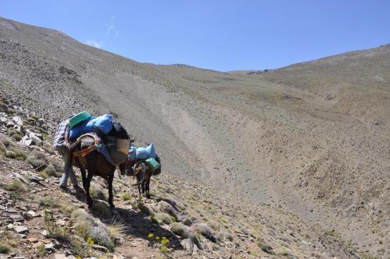Haute vallée de l'assif Tnirt : mules expérimentées seulement...