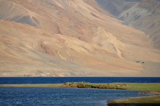 La pointe N du lac du Tsomoriri