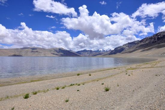 Le long du lac Tsomoriri