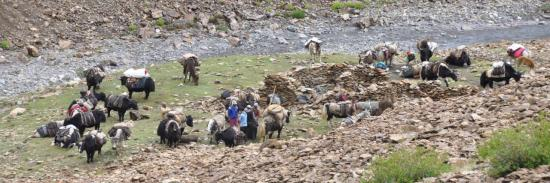 Caravane de yacks le long de la Kanji La Togpo