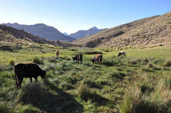 Sur le plateau du Tichka aux sources du Nfis