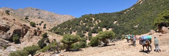Haute vallée de l'oued Nfis
