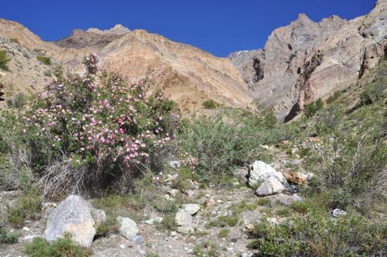 Dans la vallée de Lanak
