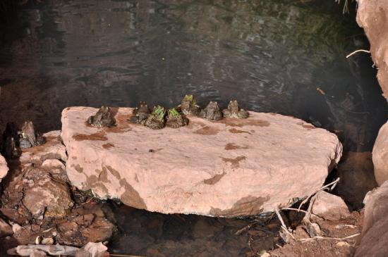 Un peu de monde sur le plongeoir de la piscine municipale d'Aghbalou...