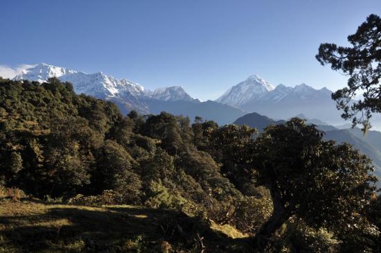 Gurja himal et Dhaulagiri 1 depuis le plateau du Jalja La (Jour 3)